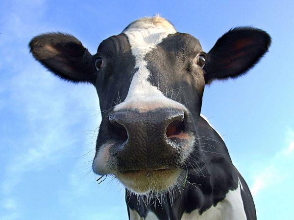 Adair Bulk Solutions - Animal Feed and Pet Food Handling